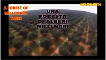 FRAUD OF XYLELLA IN THE SALENTO LAND – IN 5 MINUTES ONLY – servizi di BelSalento